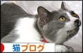 にほんブログ村 猫ブログ MIXハチワレへ